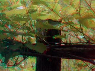 Wein fotografiert mit Kodak Retina Stereovorsatz
