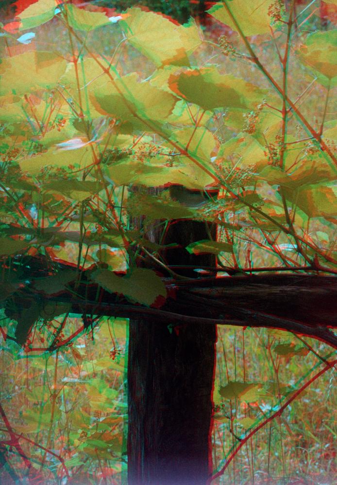 """Vinyard"" taken with the Retina IIIC and the Kodak stereo adapter"