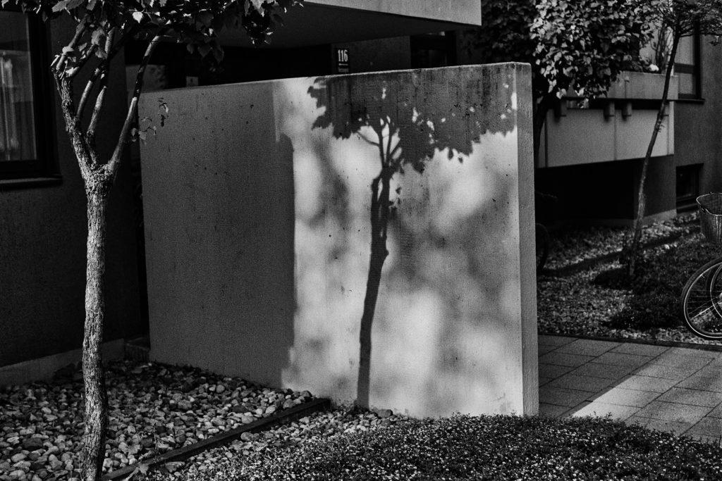 Betonbaum / Concrete Tree